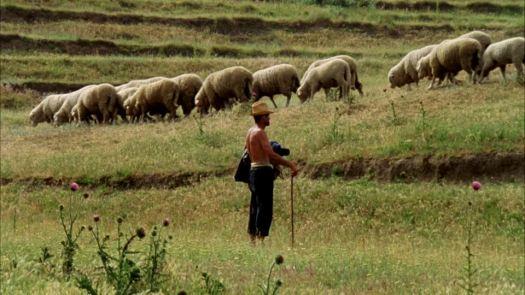 755511919-herding-dobruja-sheep-farming-sheferd