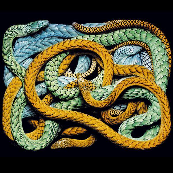 las-serpientes-mas-hermosas-del-planeta