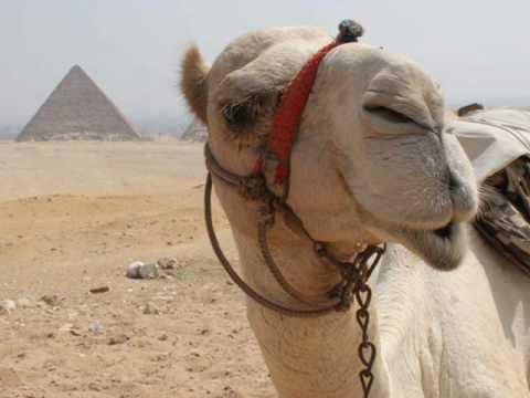 Eye-of-the-Needle-Camel
