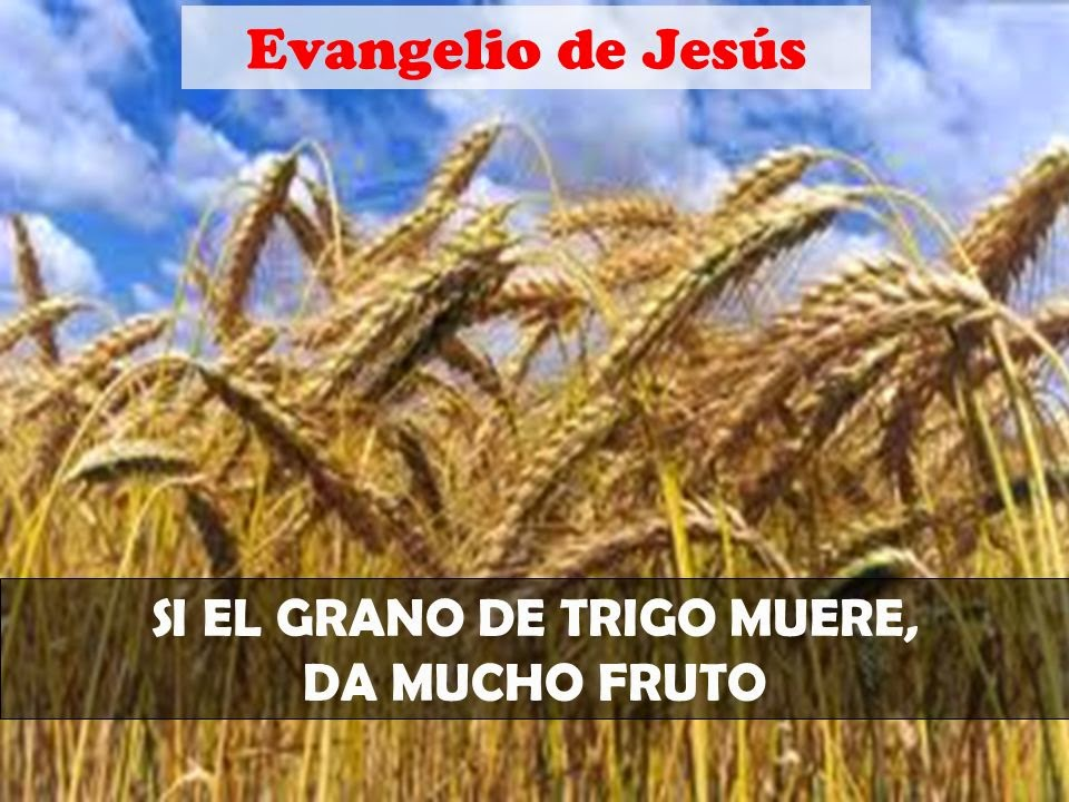20el grano de trigo cae en tierra
