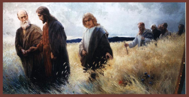 disciples eating grain